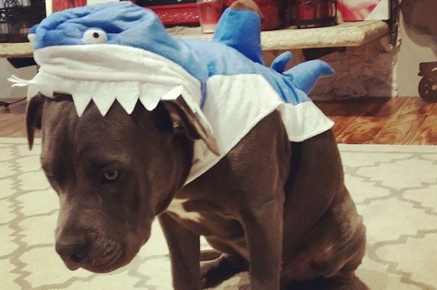 26-dogs-who-hate-their-halloween-costumes-2-24267-1412737762-22_dblbig
