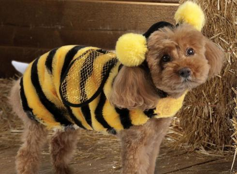 cats-dogs-halloween-costumes-10262011-29-490x360