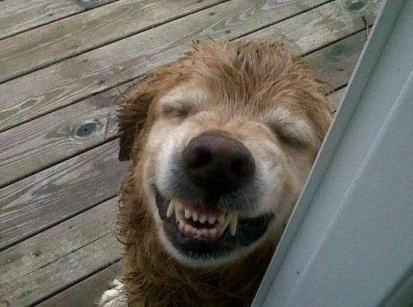 The_Laughing_Dog