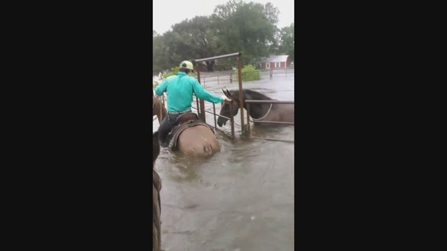 Horse_rescued_from_flooded_Texas_waters_0_4049565_ver1.0_640_360